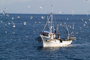 Negotiation of fishing quotas with Spain allowed Portugal to double the fishing opportunities for swordfish - 2019